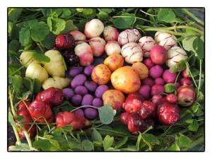 légumes2